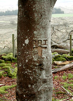 HRS 5130 Tree inscription Cynefail 2010